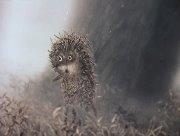 ёжик в тумане как символ растерянности